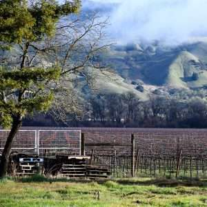 rising mists over Anderson Valley vineyards