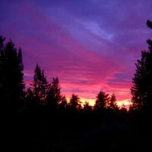 sunset behind the silhouettes of trees in Mendocino County